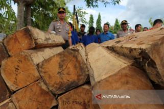 Polisi Tetapkan Pemilik Kayu Gelap Sebagai DPO