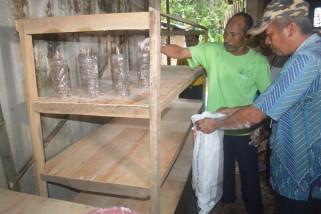 Petani Penggarap Lahan Reboisasi TNMB Dapat Pelatihan Budi Daya Semut Rang-rang