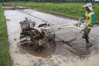 Asuransi Pertanian