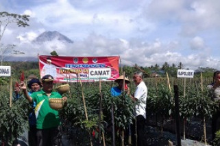 Pronojiwo Jadi Kawasan Pengembangan Agribisnis Hortikultura