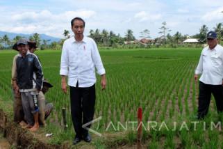Jokowi Tinjau dan Dialog dengan Pekerja Program Padat Karya (VIdeo)