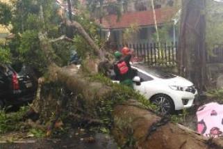 Tiga Mobil Rusak parah Tertimpa Pohon Tumbang