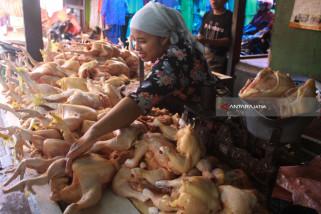 Kenaikan Harga Daging Ayam Picu Inflasi Kota Malang