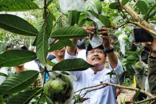 Gus Ipul Inginkan Sertifikasi Petani Organik