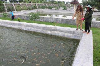 BBI Kota Madiun Produksi 298.000 Bibit Ikan