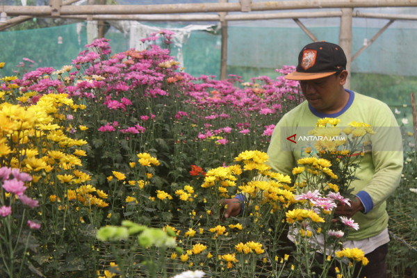 Maksimalkan Bisnis Florikultura
