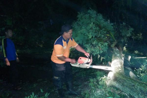 Hujan Disertai Angin Kencang Akibatkan Pohon Tumbang di Magetan