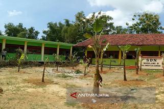 Halaman SDN di Sampang Ditanami Pohon Pisang