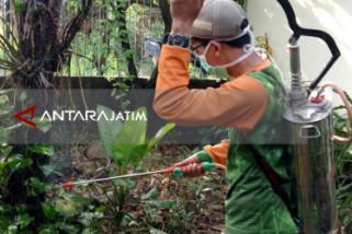 Sejumlah Warga Surabaya Resah oleh Maraknya Ulat Bulu