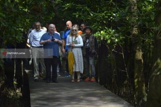 Wali Kota Liverpool Berburu Foto di Wisata Mangrove Surabaya