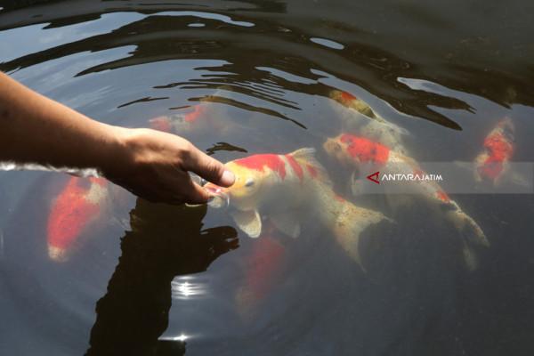 Ikan Hias asal Kota Batu Tembus Pasar Ekspor