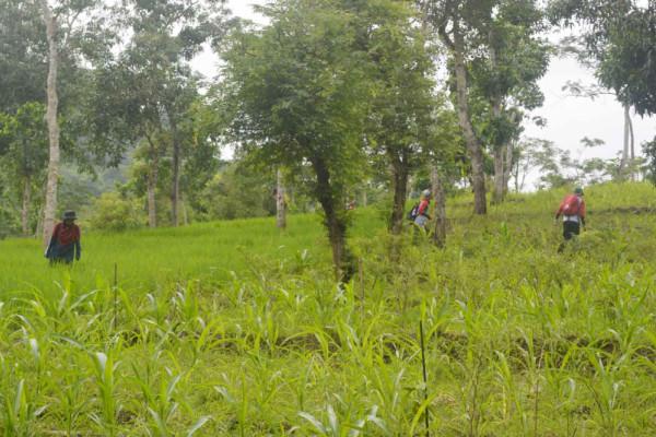 Program Mitigasi Berbasis Lahan Cara Unej Menjaga Kelestarian Alam di TN Meru Betiri