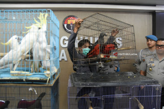 Surabaya Police Expose Illegal Wildlife Trade on Facebook