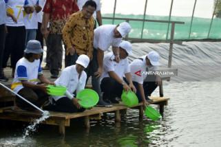 Menteri Rini Tinjau-Tabur Benih Tambak Udang Kawasan Perhutanan Sosial