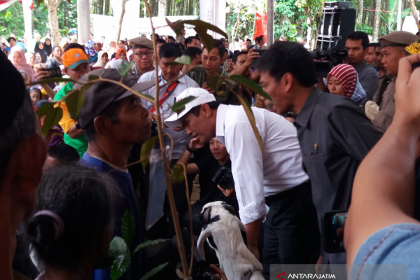 Kementerian Pertanian Gelontorkan Bibit Kopi untuk Bondowoso