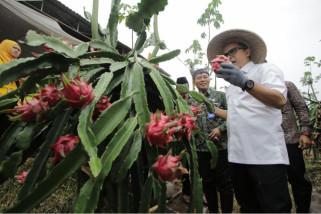 Ratusan Anak Muda Banyuwangi Ikuti Kompetisi Bisnis Rintisan Agribisnis