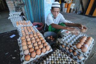 Harga Telur Terkerek Mahalnya Pakan Ayam
