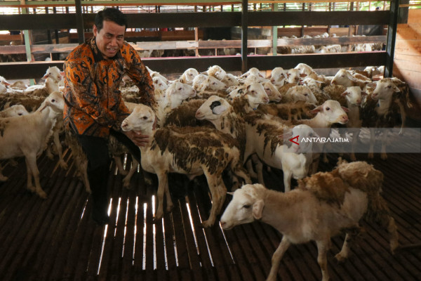 Sheep Export Market Wide Open in Malaysia: Minister