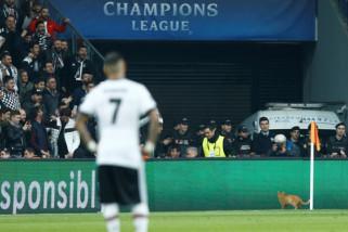 Gara-gara Kucing Masuk Lapangan , Besiktas Dikenai Denda UEFA