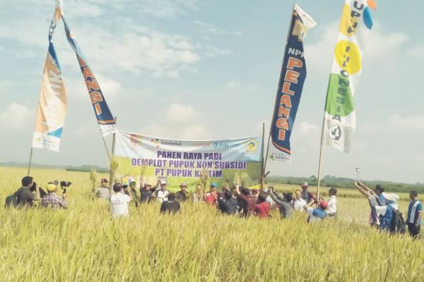 Pupuk NPK Pelangi Tingkatkan Produksi Padi di Jember