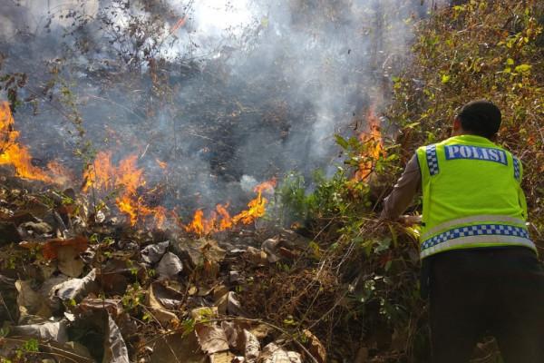 Hutan Dua Hektare di Ponorogo Terbakar