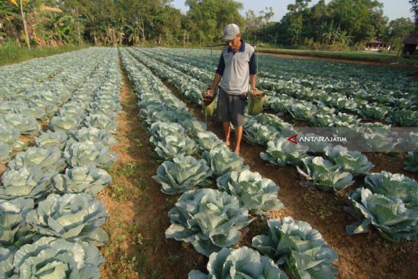 Biaya Tambahan Petani Sayur
