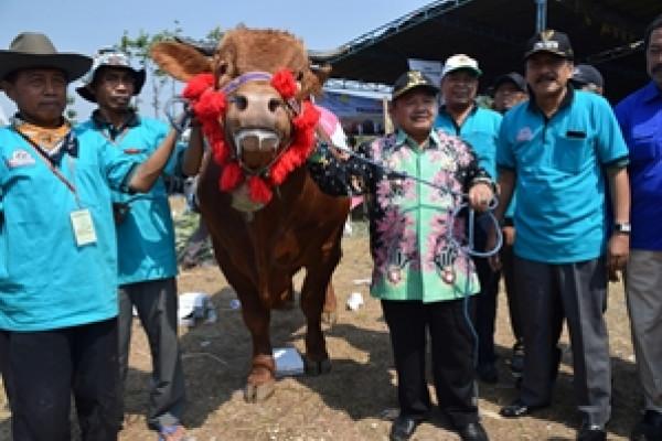 Bupati Madiun Tawarkan Sapi Juara Kontes ke Jokowi untuk Hewan Kurban