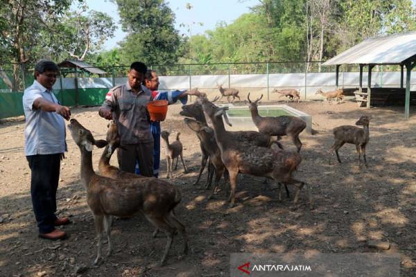 KPH Parengan akan Lepaskan Empat Rusa Jawa
