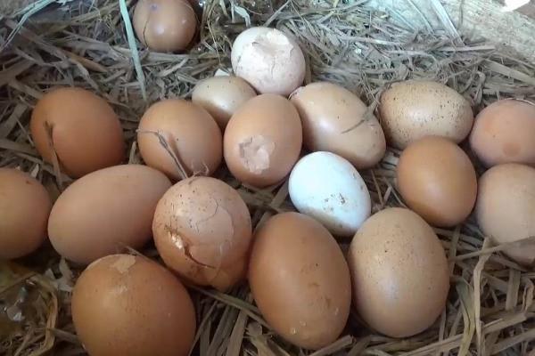 Harga Mahal, Telur Ayam Retak Cangkang di Ngawi Laris