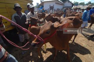 Pemkab Bangkalan Tingkatkan Populasi Sapi dengan Upsus-Siwab