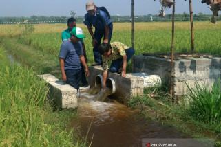 Harga Gabah Lahan Banjir Bojonegoro Rp5.200/Kilogram