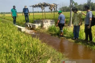 Lahan Tadah Hujan Besah Bojonegoro Panen Padi (Video)