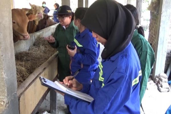 "Pemkab Madiun Sosialisasikan Hewan Kurban Penuhi Syarat ""Asuh"""
