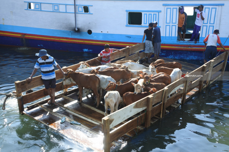 Permintaan Hewan Kurban Dari Pulau Madura