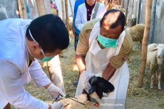 Dinas Peternakan  Bojonegoro  Cek Kesehatan Hewan Kurban