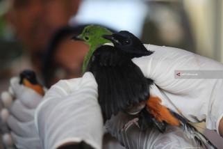 Penggagalan Penyelundupan Burung