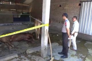 Polda Jatim Perketat Pengawasan Perdagangan Ternak Antarprovinsi
