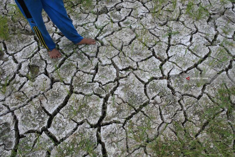 Lahan Pertanian Retak