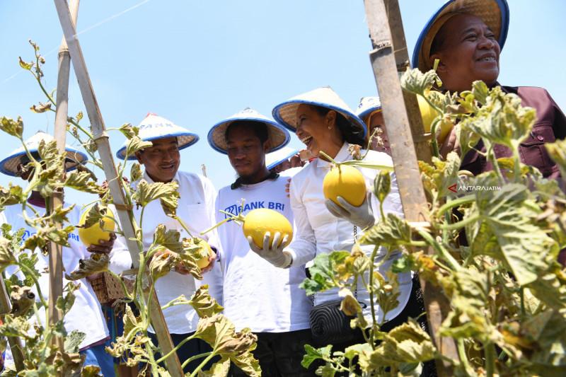 Keterbatasan Fisik Tak Halangi Qomar Kembangkan Melon