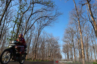 Kurangi Peningkatan Suhu Udara,   DLH Bojonegoro Tambah Tanaman