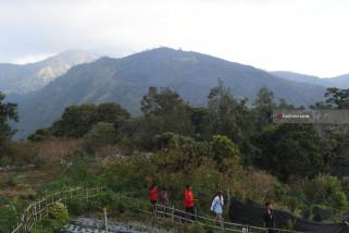 Wisata Lereng Gunung Lawu