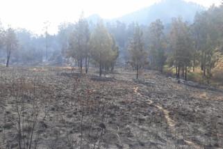 Luas Kebakaran Hutan di Gunung Argopuro Capai 20 Hektare