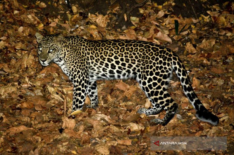 Taman Nasional Baluran Situbondo Diminati  Penggemar Fotografi (Video)