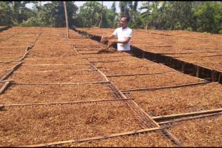 Petani Keluhkan Penurunan Harga Tembakau