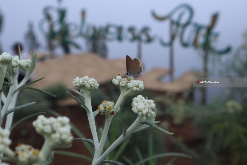 Abadinya Desa Wisata Edelweiss