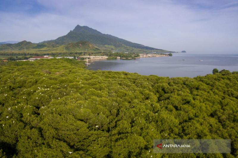 Kampung Blekok Situbondo Siapkan Paket Wisata Edukasi