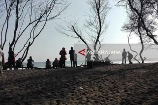 Menikmati Deburan Ombak di Pantai Goa Cemara