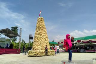Belimbing 1,5 Ton Semarakkan Festival Belimbing Bojonegoro (Video)