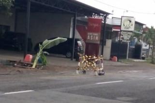Antisipasi Kecelakaan, Warga Tanam Pisang di Jalan Berlubang