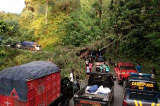 Jalur Selatan Lumajang-Malang Sempat Ditutup Total Akibat Pohon Tumbang
